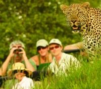 Guests watching Leopard